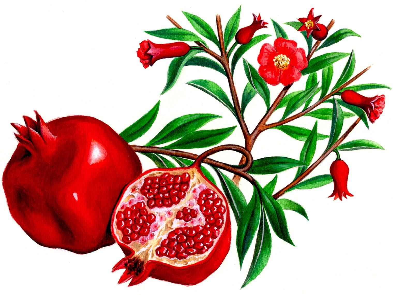 кардиомагнил при повышенном холестерине
