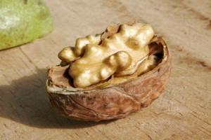 walnutnastoika iz peregorodok greckogo oreha