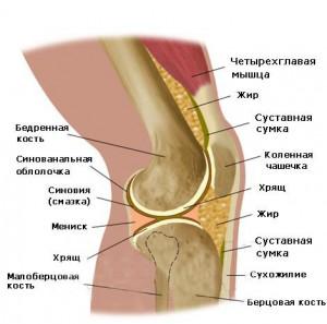 Лечение артрита коленного сустава народными средствами