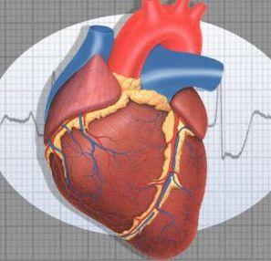 Застойная сердечная недостаточность и ее симптомы