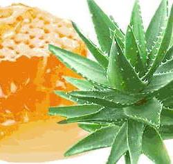 Мед и сок алоэ для лечения носа