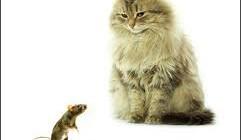 Как избавиться от мышей в доме народными средствами?