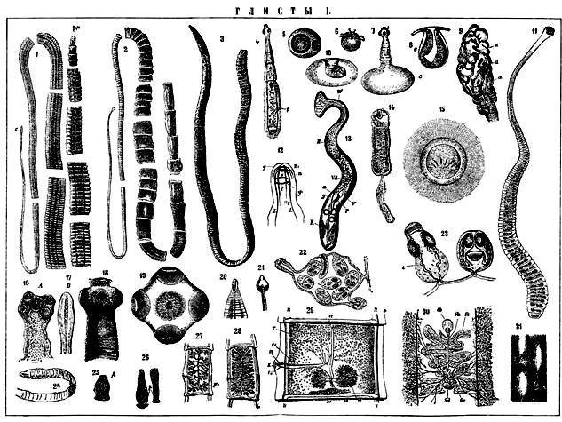 таблетки от глистов и других паразитов